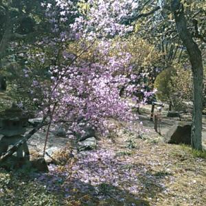 秩父二十九番は花の寺