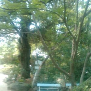 浄瑠璃寺門前からバスに乗り、家路につく