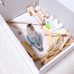 ゴミ箱を漁るトリ