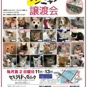 8/9(日)譲渡会のお知らせ