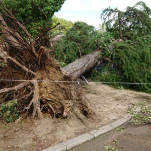 去年の台風よりも大きいそうですよ!