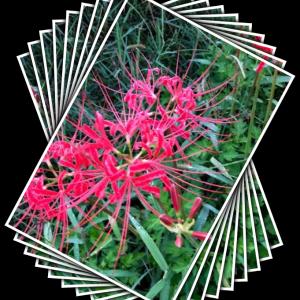 PCアートの宿題   SmartArt作成の「春の花」