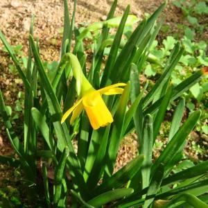 我が家のお花も、蕾を付け始めました♪