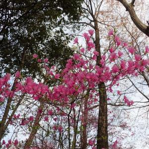龍野公園のお花♪