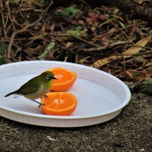 鳥の餌台♫