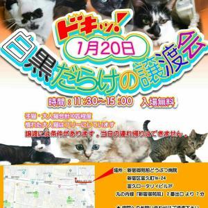 1月20日(日)譲渡会開催のお知らせ!!