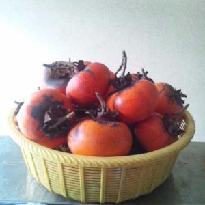 柿がいっぱい取れました+古民家診断