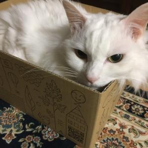 箱に入るてんてん