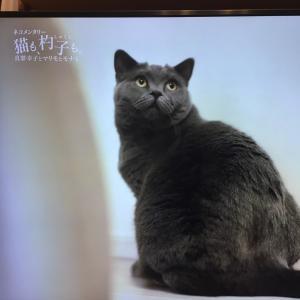 猫も杓子も。