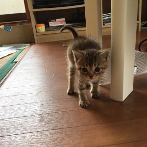 猫ボラさんちの子猫ちゃん、里親さん決まりました。