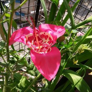 この花の名前は。