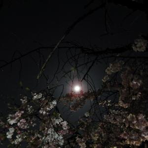 今夜はスーパームーン・桜月