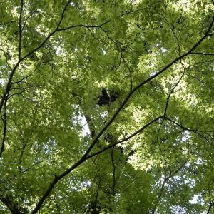 森林公園の5月の花