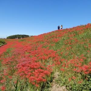 矢勝川の彼岸花と高砂山公園