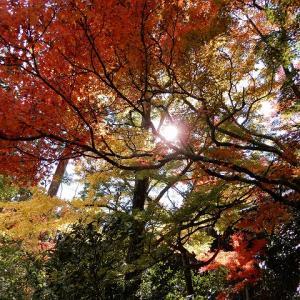 猿投山と雲興寺の紅葉