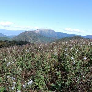 山頂は帰化植物に占領されてた!高室山