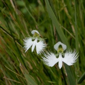 愛知県森林公園 植物園 7月の花