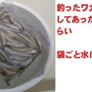 ワカサギの甘露煮 グウタラ流レシピ2020版