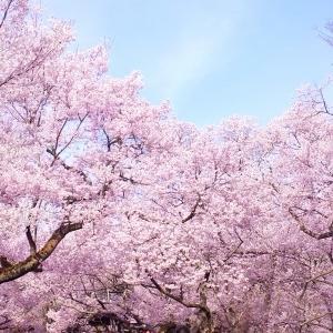 季節は冬から春へ!小樽の人気花見スポットは5月が狙い目!