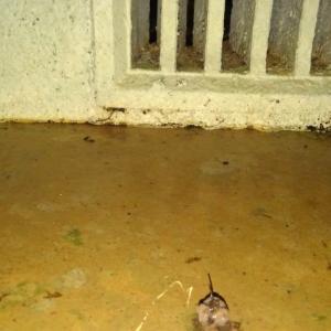 雨漏り診断士が行く・・・床下の雨漏り・・・
