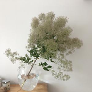 【日記】お気に入りの花屋さんでスモークツリーを買って想うこと