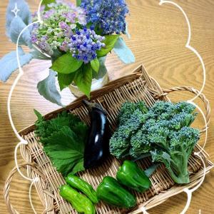 収穫した野菜。