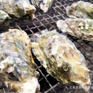 【五島の牡蠣】椿まつりで五島産「牡蠣」を食べてきました!