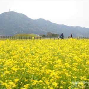 【イベント】第11回 「魚津ヶ崎菜の花まつり」開催