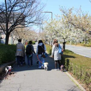 島の春散歩♪