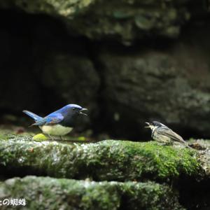 大ぼらの鳥見