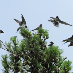 梅雨明けの高原の鳥