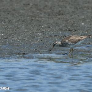 水鳥も猛暑枯れか
