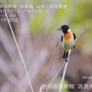 鳥友写真展のお知らせ
