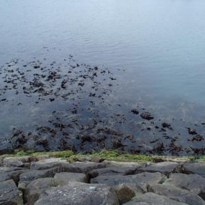 緊急事態宣言下の散策と延長後の釣行方針