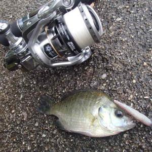 梅雨末期の釣況