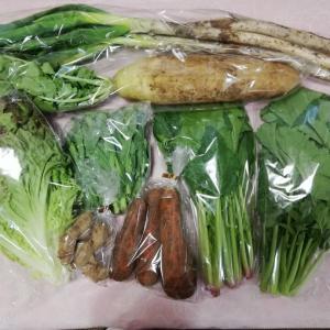 【あるまま農園】気分を変えてくれるお野菜