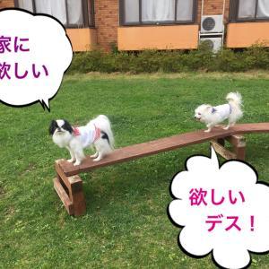 犬の庭作り・人工芝