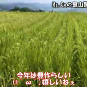 YouTube動画配信「Mr.Goさんの里山開拓シリーズ」vol.22~24