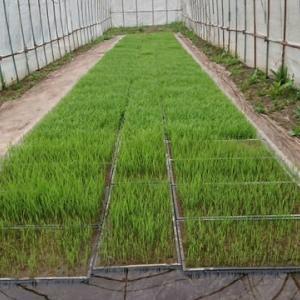 苗床の様子