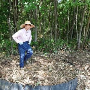 落葉(腐葉土)の堆肥場
