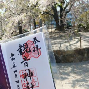 しだれ桜が綺麗な【観音神社】~広島市佐伯区