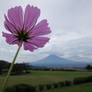 コスモスと彼岸花と富士山と猫で、今年の9月に思い残すことはない。