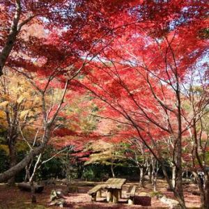天城の紅葉はまさに見頃だった。