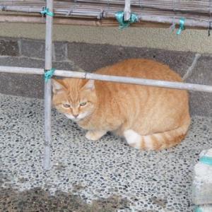 雨の日の猫と、予約必須のモンブラン。