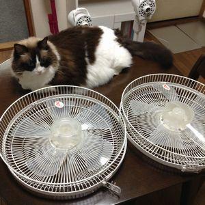 温泉療法と、ドアと扇風機の大掃除。
