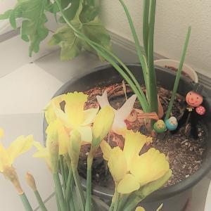 ヒナちゃんを埋葬しました