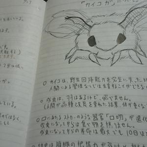 カイコガ(蚕姫)
