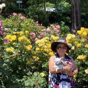 ポートランド は薔薇の都
