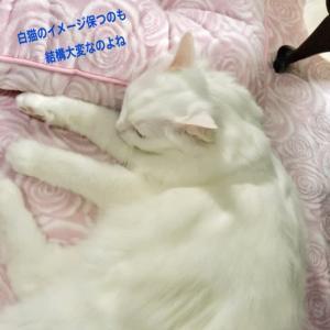 癒しの白猫ブラッシング / 夜に輝く白い曼珠沙華
