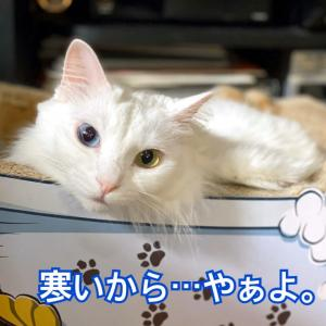 キーちゃんひとりの夜散歩 / 旬の苺 食べ比べ